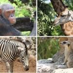 Dusit Zoo – Bangkok